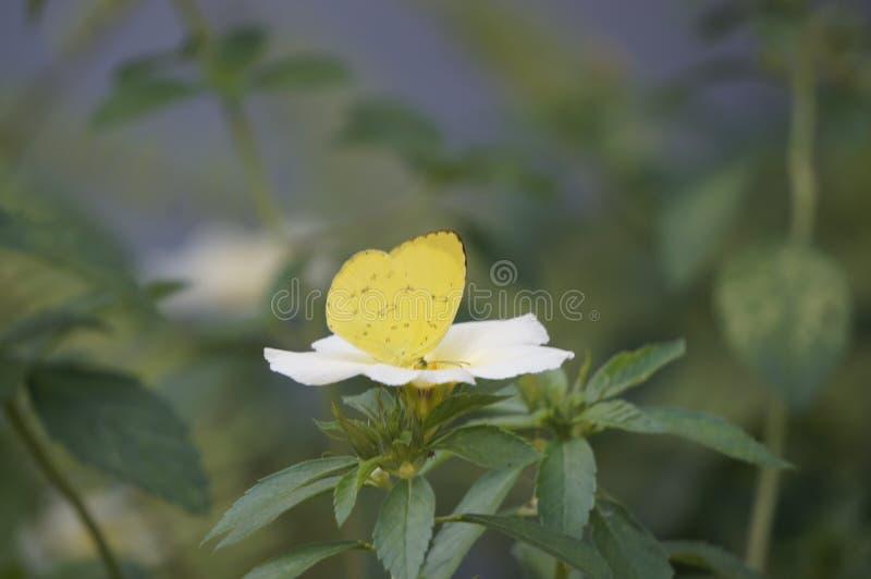 Mariposas y flores en un jardín fotografía de archivo libre de regalías
