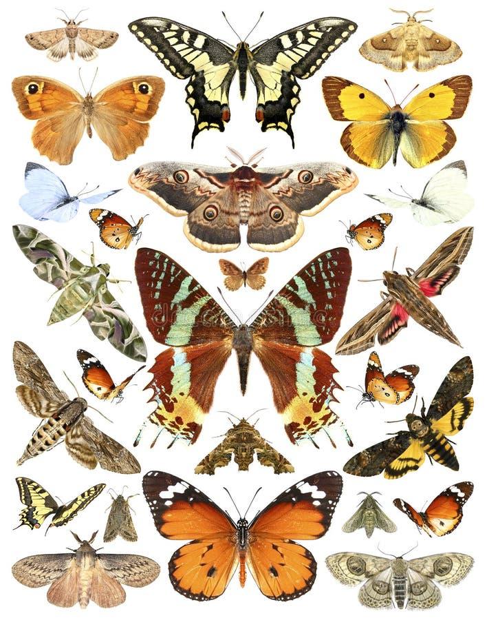 Mariposas y polillas fotografía de archivo libre de regalías