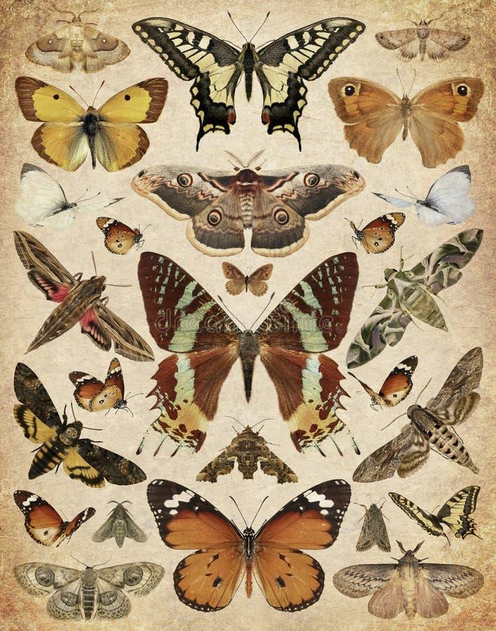 Mariposas y polillas fotografía de archivo