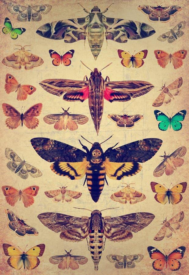Mariposas y polillas imagen de archivo libre de regalías