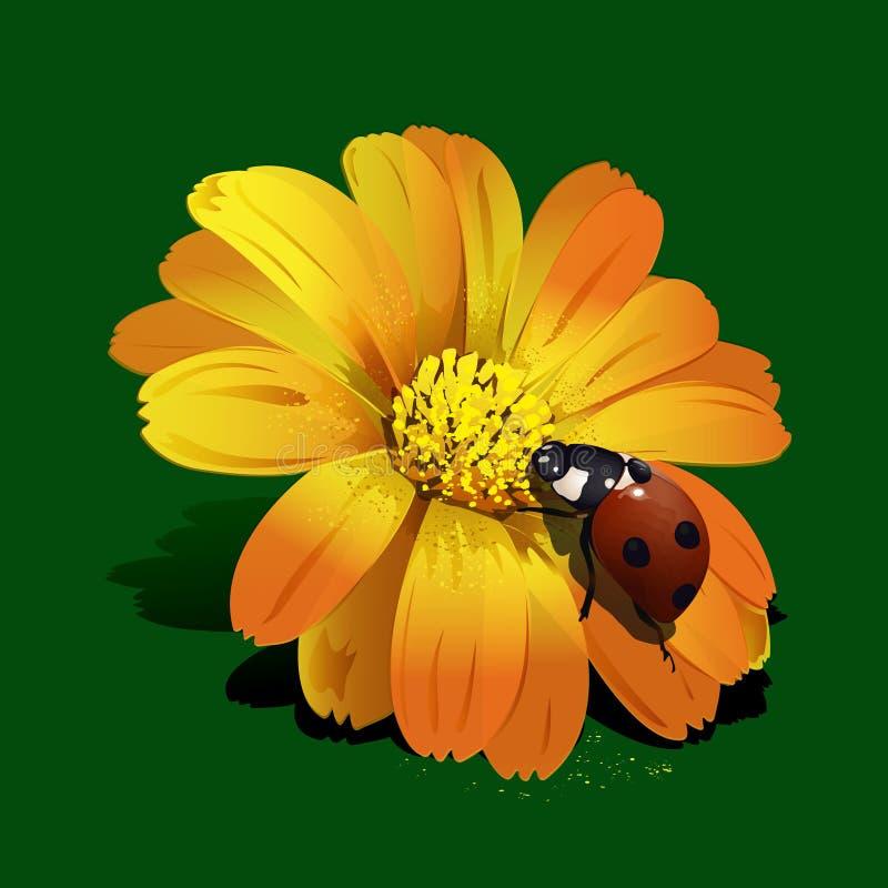 Mariquita en la flor stock de ilustración