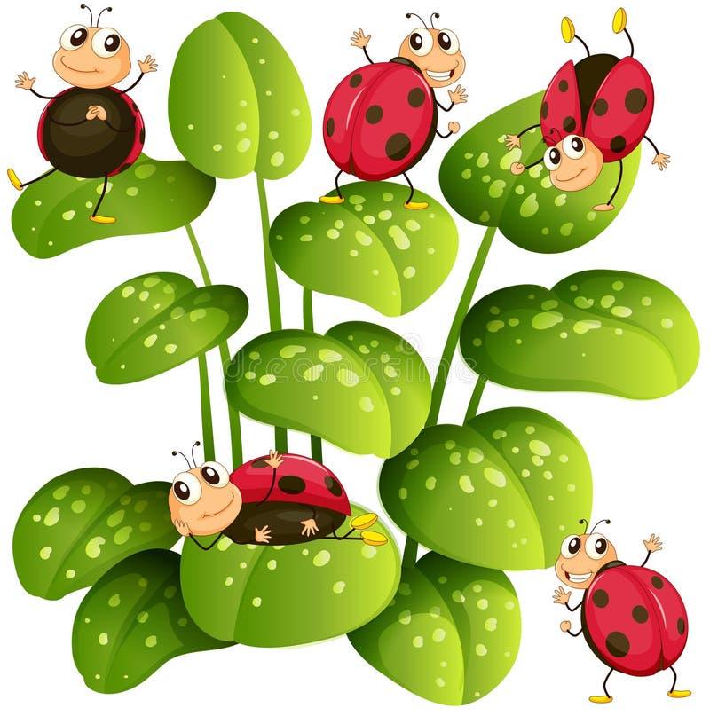Mariquitas en las hojas verdes stock de ilustración