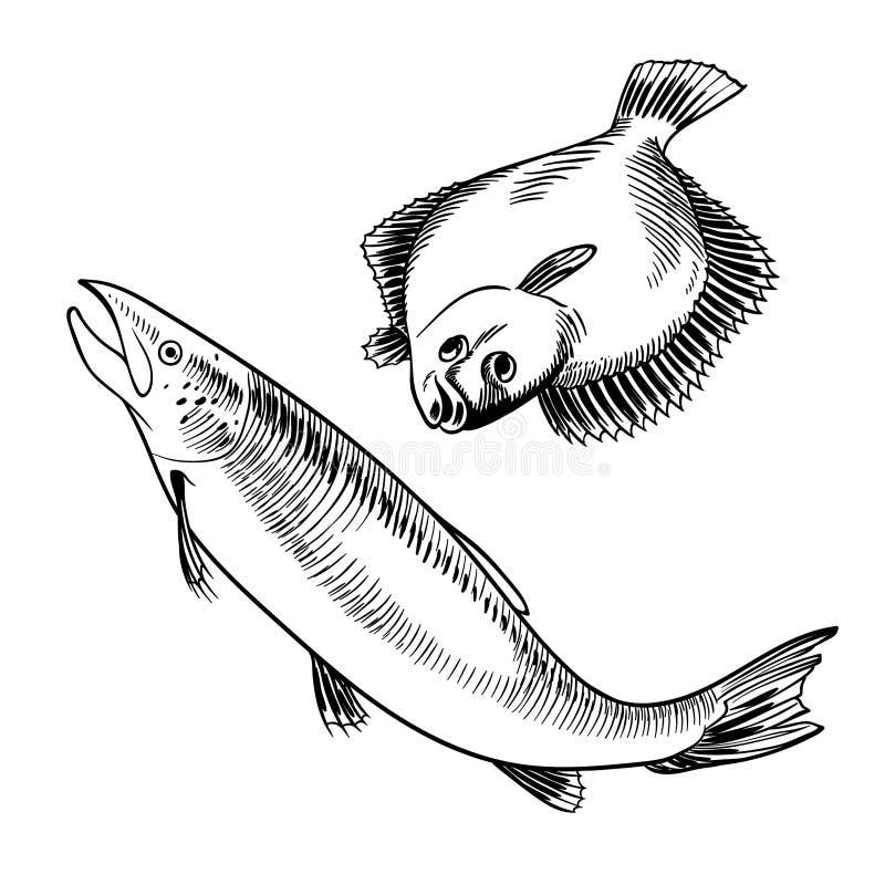 Marisco ajustado com ilustração dos salmões e da solha ilustração royalty free