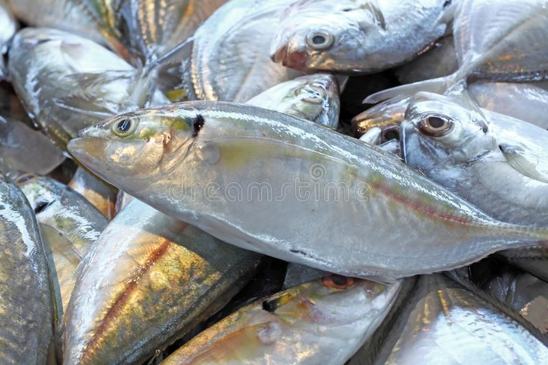 Marisco dos peixes frescos no fundo do close up do mercado imagens de stock royalty free