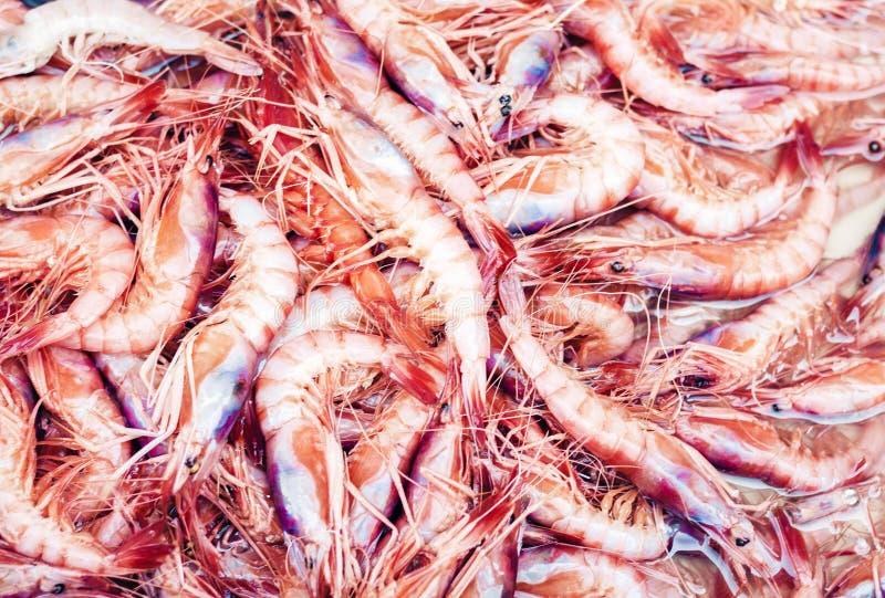 Marisco fresco do camarão para a venda no mercado de peixes Pescheria de Catania, Sicília, Itália imagem de stock