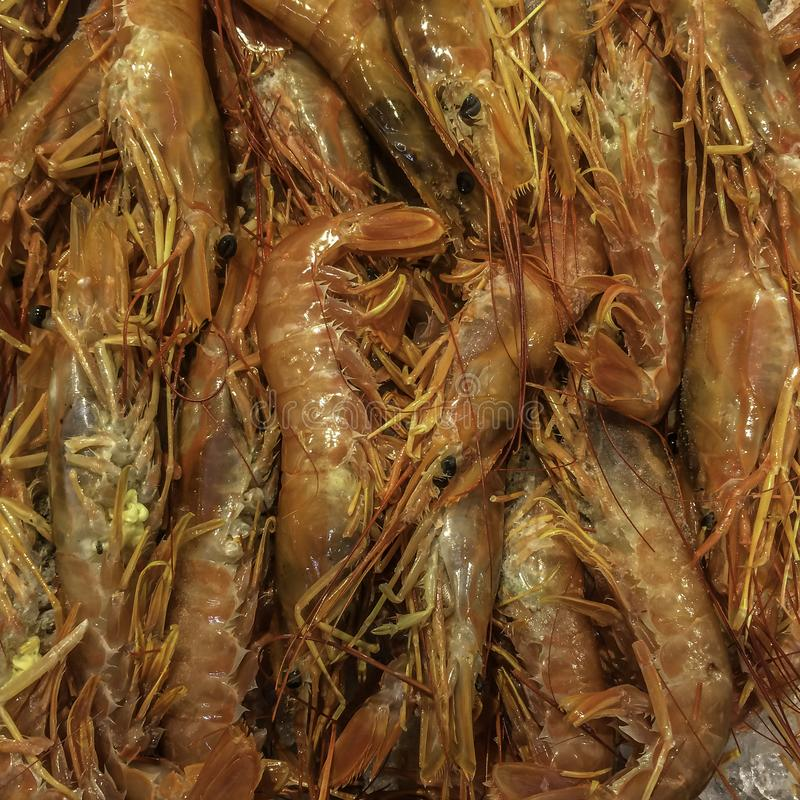 Marisco fresco no gelo no mercado asiático foto de stock royalty free