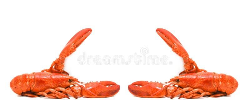 Marisco isolado/cozinhado da lagosta da lagosta no fundo branco foto de stock