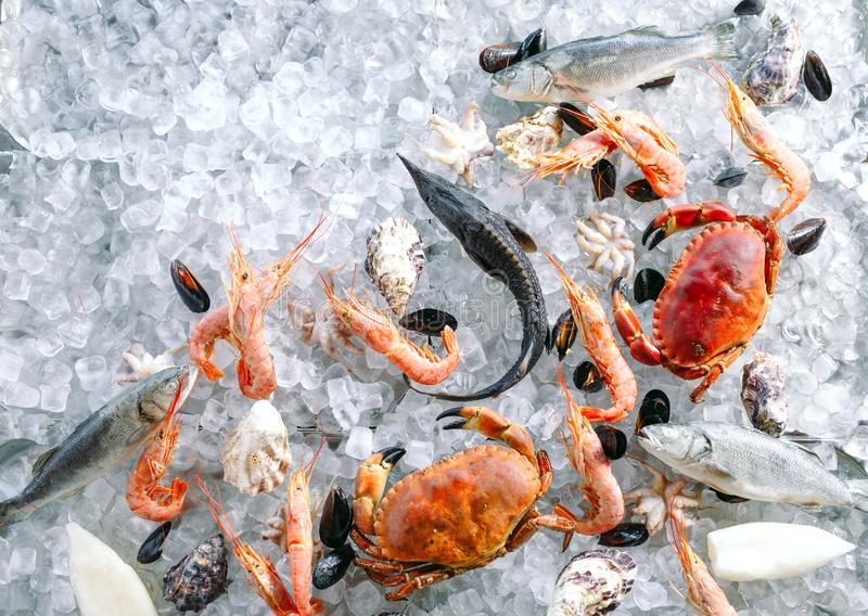 Marisco no gelo Caranguejos, esturjão, marisco, camarão, Rapana, Dorado, no gelo branco foto de stock royalty free