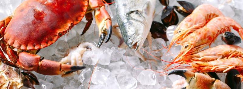 Marisco no gelo Caranguejos, esturjão, marisco, camarão, Rapana, Dorado, no gelo branco imagem de stock royalty free