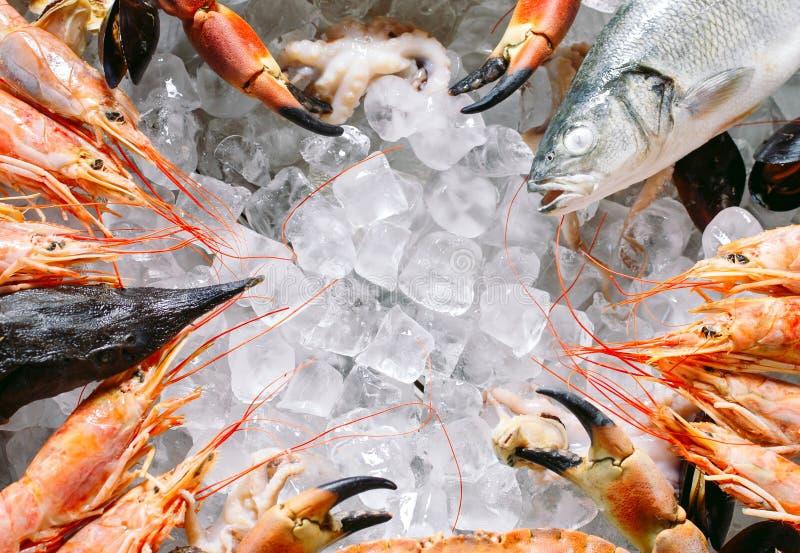 Marisco no gelo Caranguejos, esturjão, marisco, camarão, Rapana, Dorado, no gelo branco fotografia de stock royalty free