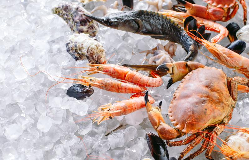 Marisco no gelo Caranguejos, esturjão, marisco, camarão, Rapana, Dorado, no gelo branco fotos de stock royalty free