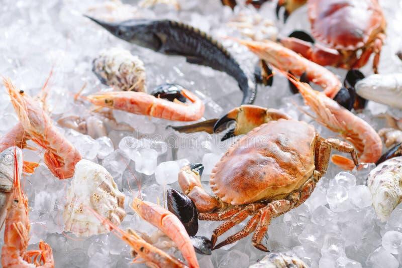 Marisco no gelo Caranguejos, esturjão, marisco, camarão, Rapana, Dorado, no gelo branco imagens de stock royalty free