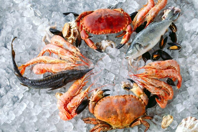 Marisco no gelo Caranguejos, esturjão, marisco, camarão, Rapana, Dorado, no gelo branco imagens de stock