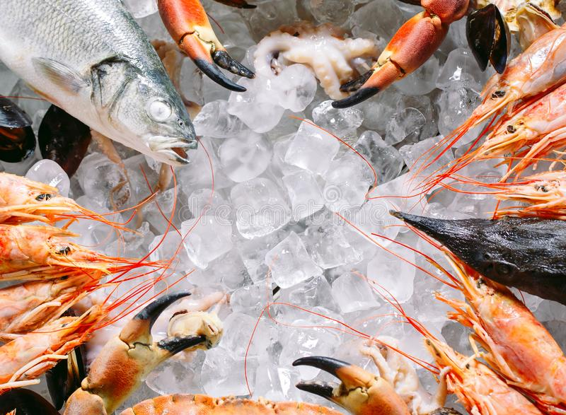 Marisco no gelo. Caranguejos, esturjão, marisco, camarão, Rapana, Dorado, sobre gelo branco foto de stock