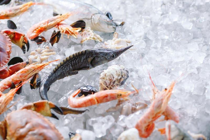 Marisco no gelo. Caranguejos, esturjão, marisco, camarão, Rapana, Dorado, sobre gelo branco foto de stock royalty free