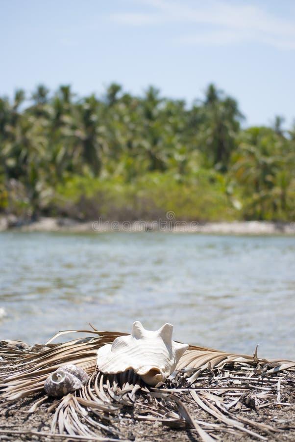 Marisco, proporção da natureza, teste padrão de fibonacci Paraíso tropical em Guna Yala, Kuna Yala, San BLas, ilhas, Panamá espir foto de stock royalty free