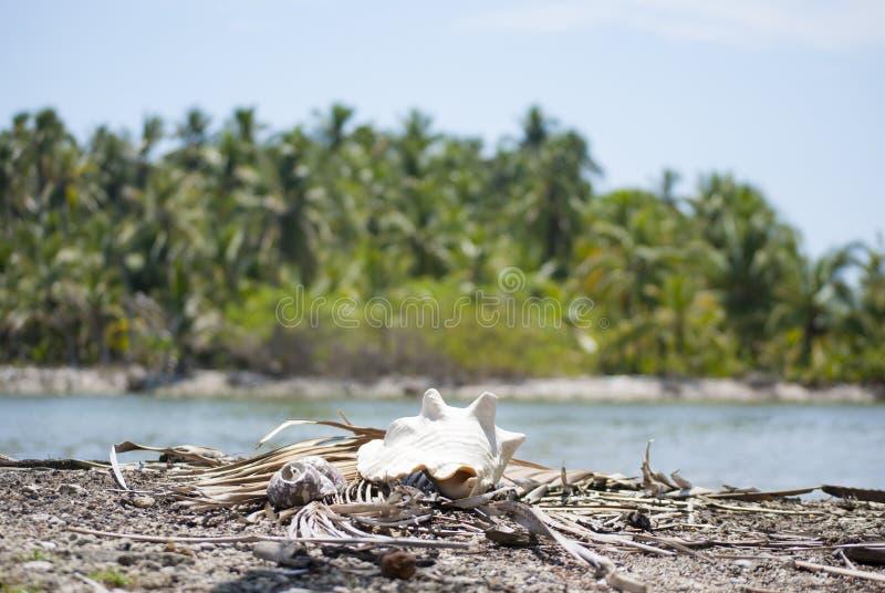 Marisco, proporção da natureza, teste padrão de fibonacci Paraíso tropical em Guna Yala, Kuna Yala, San BLas, ilhas, Panamá espir imagens de stock