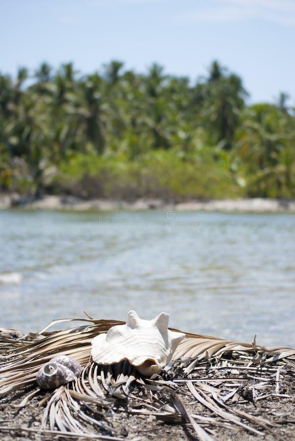 Marisco, proporção da natureza, teste padrão de fibonacci Paraíso tropical em Guna Yala, Kuna Yala, San BLas, ilhas, Panamá espir foto de stock
