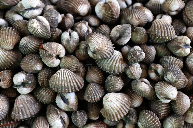 Mariscos de los berberechos, pila de opinión superior de los berberechos frescos de la sangre, berberechos o crustáceos crudos fr imágenes de archivo libres de regalías