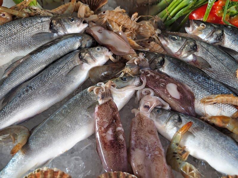 Mariscos gastrónomos frescos con los camarones, los pescados, el pulpo y los tomates en el hielo y los pescados imagen de archivo