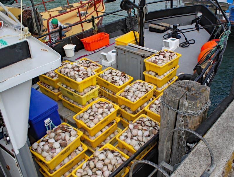Mariscos recién pescados llenos en los envases de plástico amarillos imagen de archivo libre de regalías