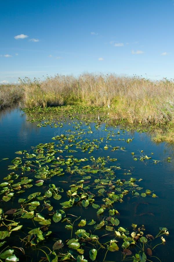 Marismas de Florida imagem de stock royalty free