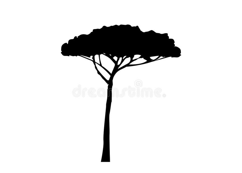 Maritieme Pijnboomboom, Pinus de mediterrane die installatie van Pinaster, vector op witte achtergrond wordt geïsoleerd royalty-vrije illustratie