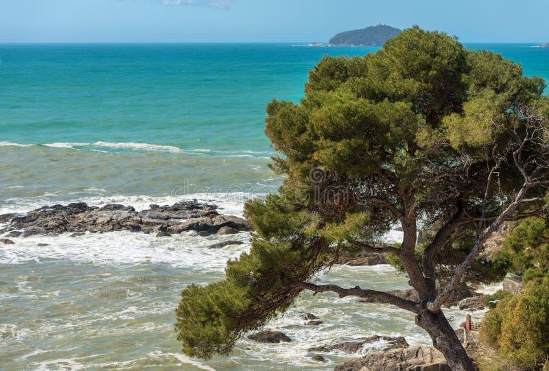 Maritime Pine Tree and Sea - Liguria Italy stock photography