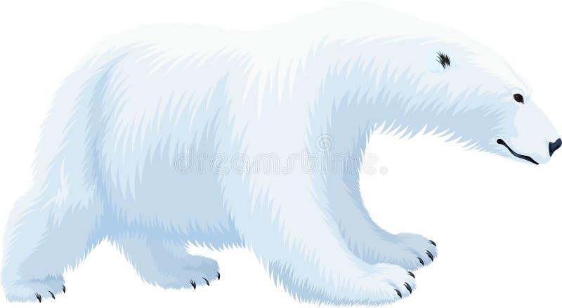 maritimus do Ursus do urso polar do vetor ilustração royalty free