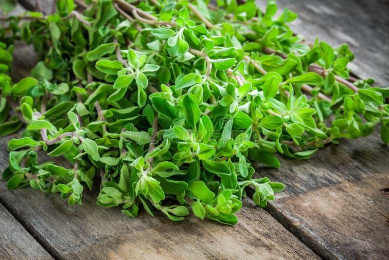 Marjolaine verte crue fraîche d'herbe sur une table en bois images stock