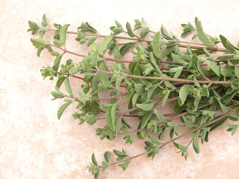 Marjoram stock photos