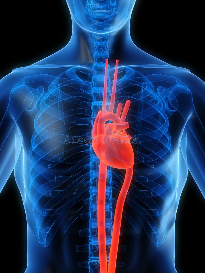 markerad hjärta vektor illustrationer