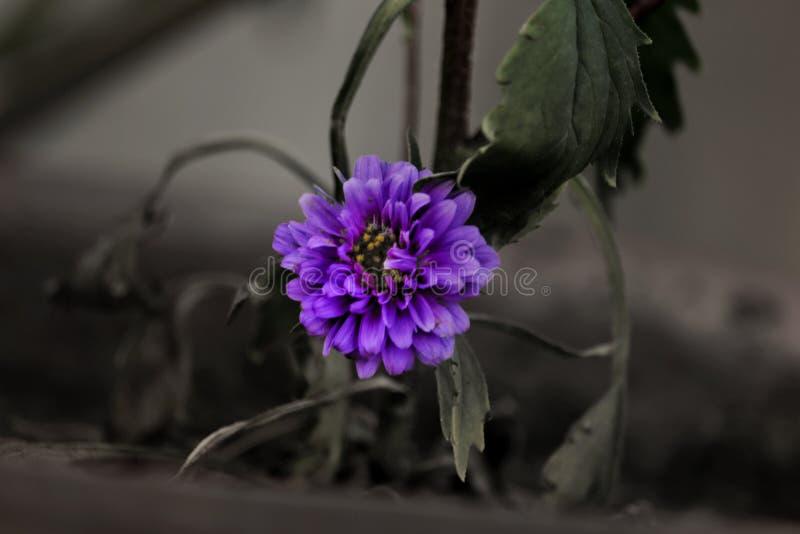 Markerad purpurfärgad blomma royaltyfria foton