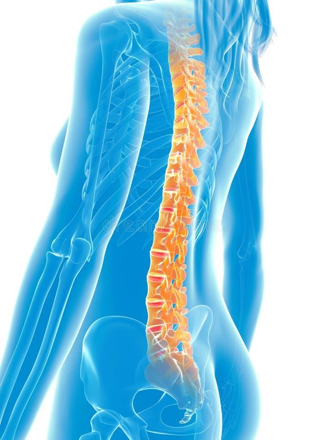 Markerad rygg stock illustrationer