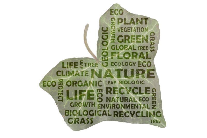 Markeringswolk aan de belangrijkste sleutelwoordenaard, groen, het recycling en het leven stock fotografie