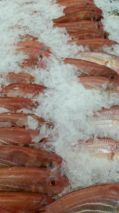 Market fish seafood royalty free stock photos