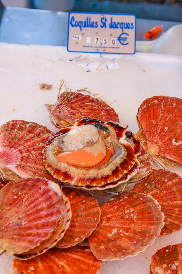 Market Fresh Red Scallops stock photography