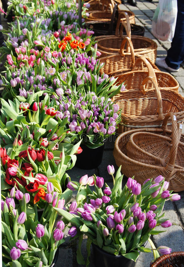 Market with a lot of tulips. And baskets royalty free stock photography