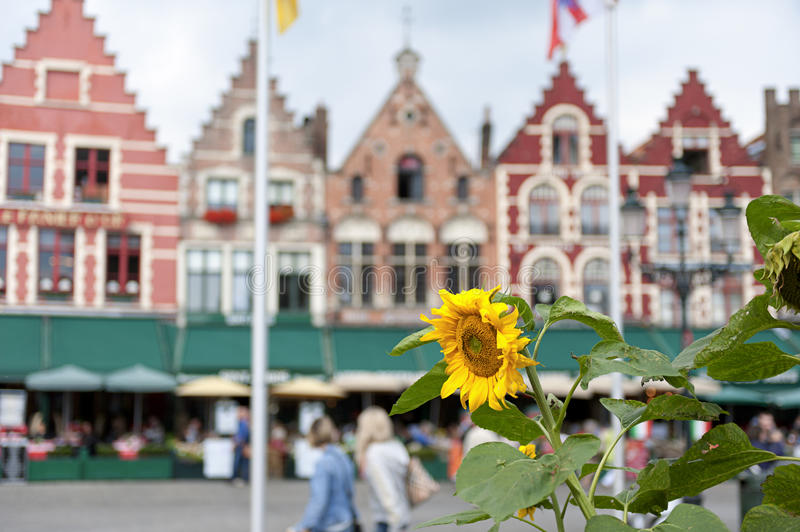 Market square, Bruges, Belgium. Row houses on Market square in the historical city centre of Bruges, Flanders, Belgium. Focus was on the sunflower in the royalty free stock image