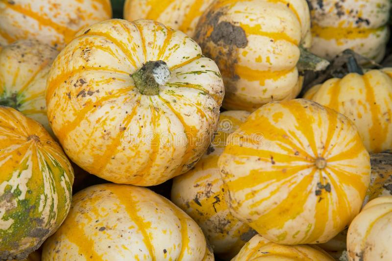 Yellow squashes on a market stall. A market stall selling squashes- seen close up so it fills the frame stock photo