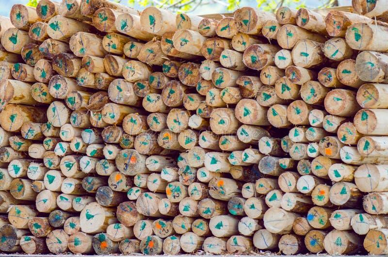 Markierte gehackte Bäume lizenzfreies stockfoto