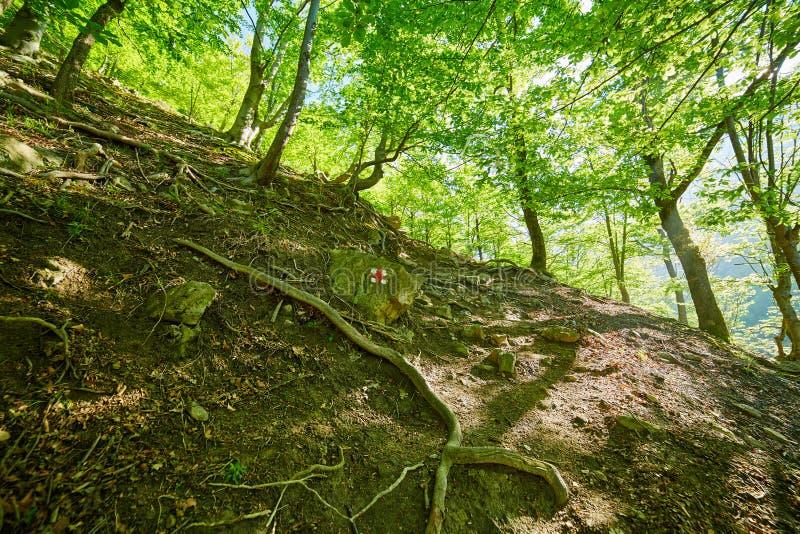 Markierte Spur im Wald stockbild