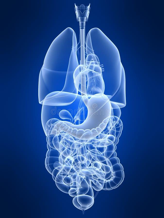 Markierter Magen stock abbildung