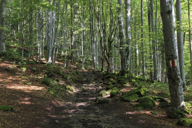 Markierter Weg durch den Wald im Sommer stockbilder