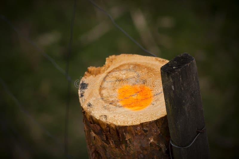 Markiertes Holz stockfotografie