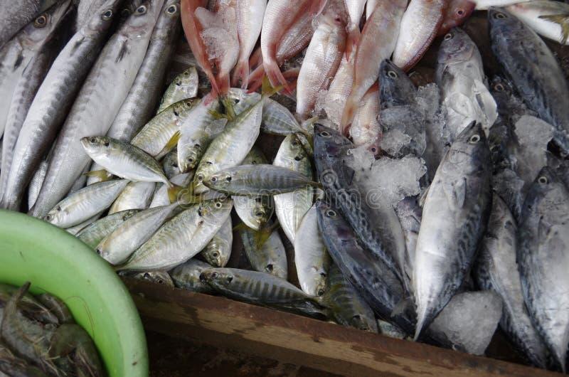 Marknaden för fisk och skaldjur hämtades från tumien 950 och dslr pentax k 5 ii med kit 18 135, detta är en bild i adobe-format s royaltyfri fotografi