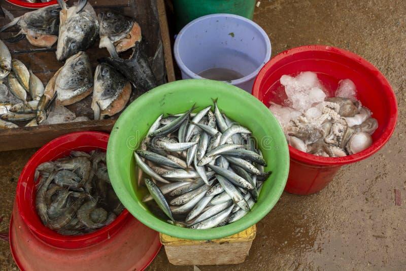 Marknaden för fisk och skaldjur hämtades från tumien 950 och dslr pentax k 5 ii med kit 18 135, detta är en bild i adobe-format s royaltyfria bilder