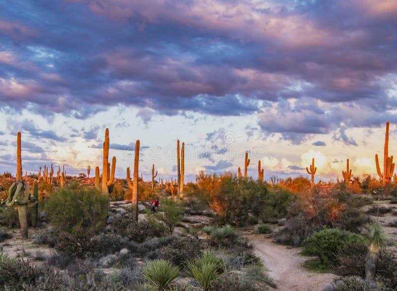 Markotni nieba na halnym jechać na rowerze śladzie w Północnym Scottsdale AZ obraz royalty free