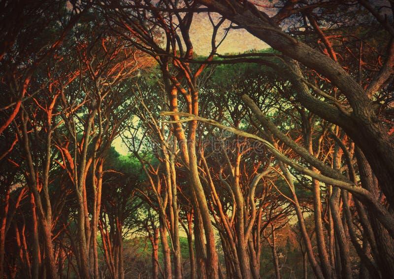 Markotny grunge textured kołtuniasty las obrazy royalty free