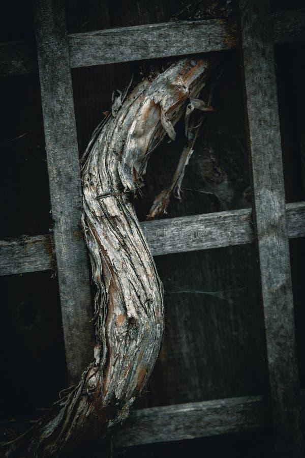 Markotny tło winograd w Trellis zdjęcia stock